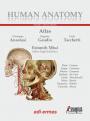 Human Anatomy - Multimedial Interactive Atlas - Vol. 2