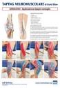 Taping NeuroMuscolare - Ginocchio - Applicazione doppio ventaglio - David Blow - Poster